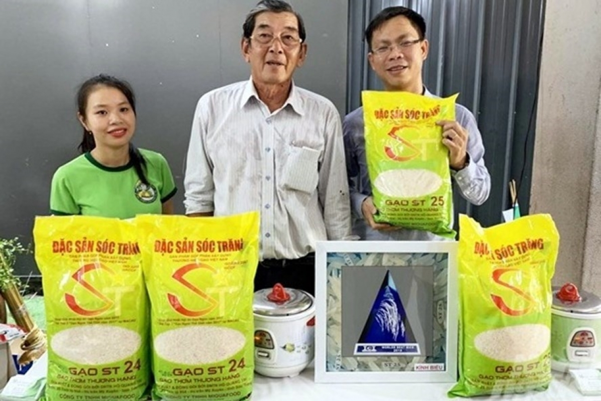 ST24 and ST24 rice varieties are cross-bred by engineer Ho Quang Cua and his colleagues.