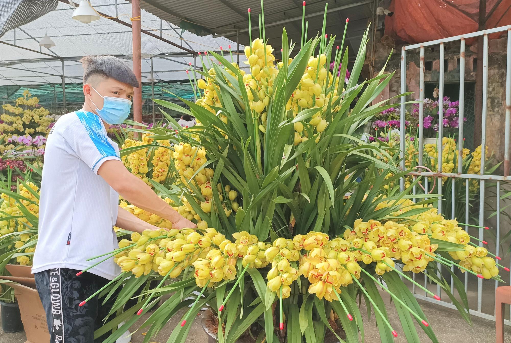Hoa lan Trung Quốc tràn ngập, đắt đỏ ngang ngửa lan Đà Lạt - Ảnh 6.