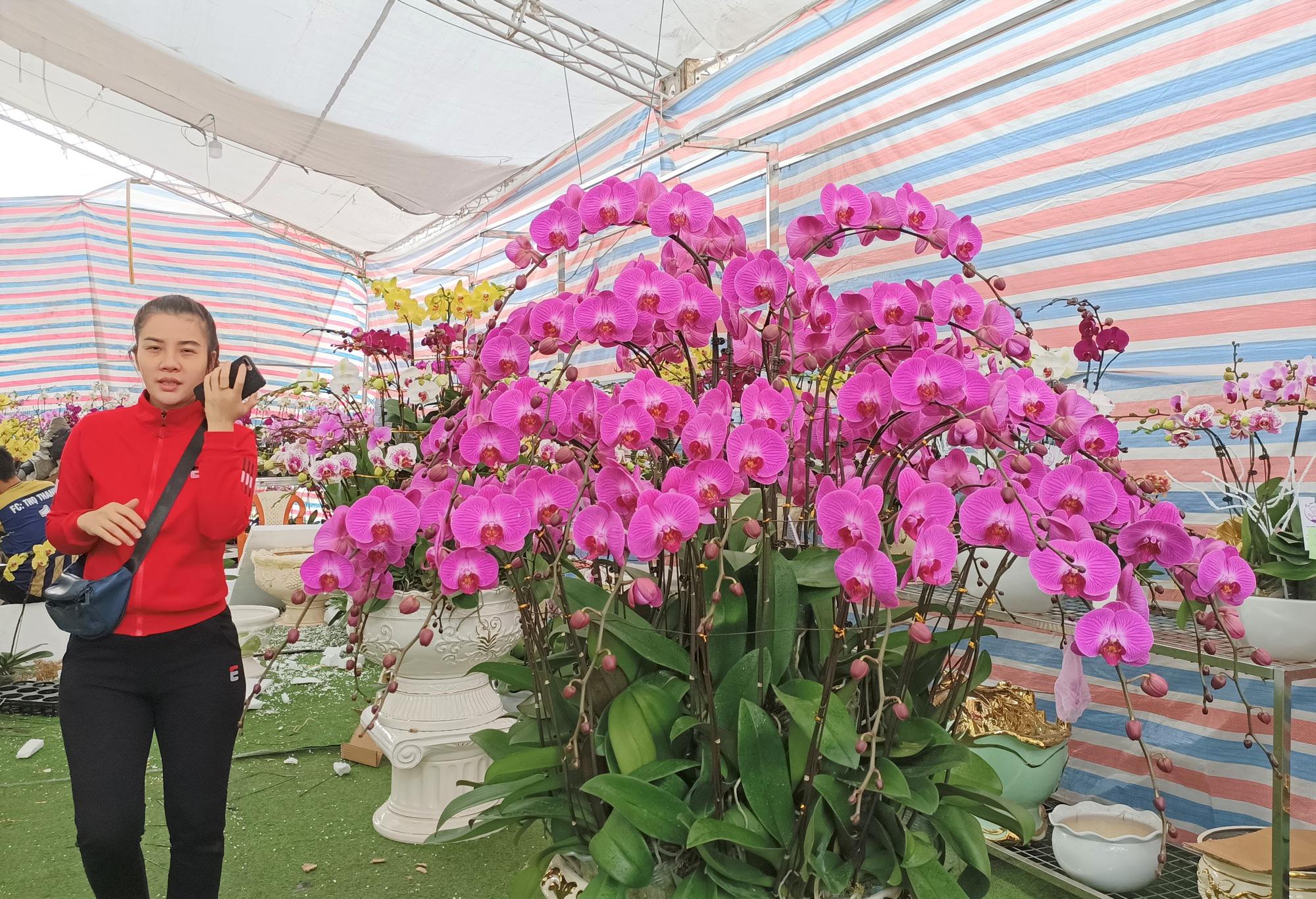 Hoa lan Trung Quốc tràn ngập, đắt đỏ ngang ngửa lan Đà Lạt - Ảnh 9.