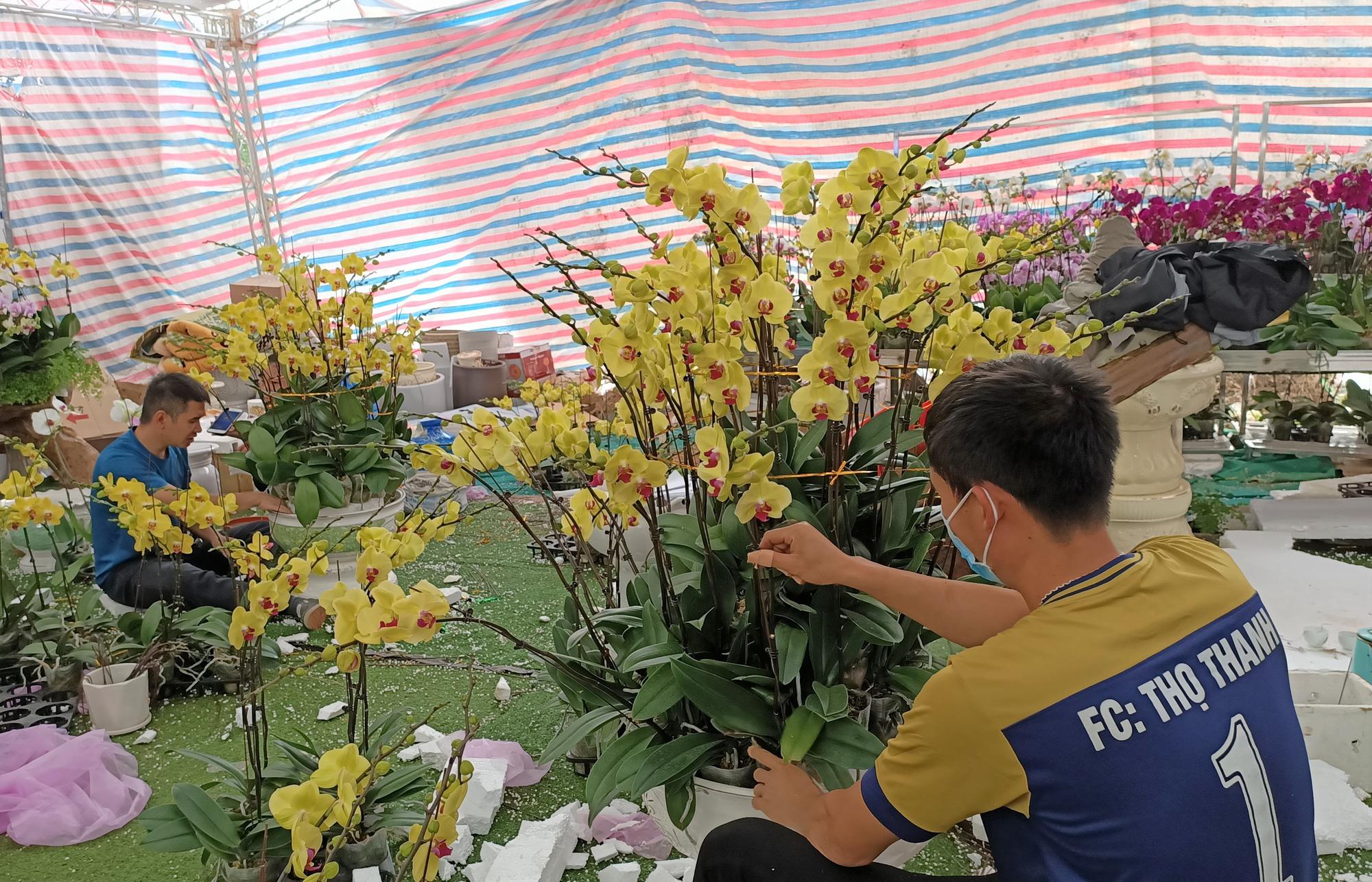 Hoa lan Trung Quốc tràn ngập, đắt đỏ ngang ngửa lan Đà Lạt - Ảnh 11.
