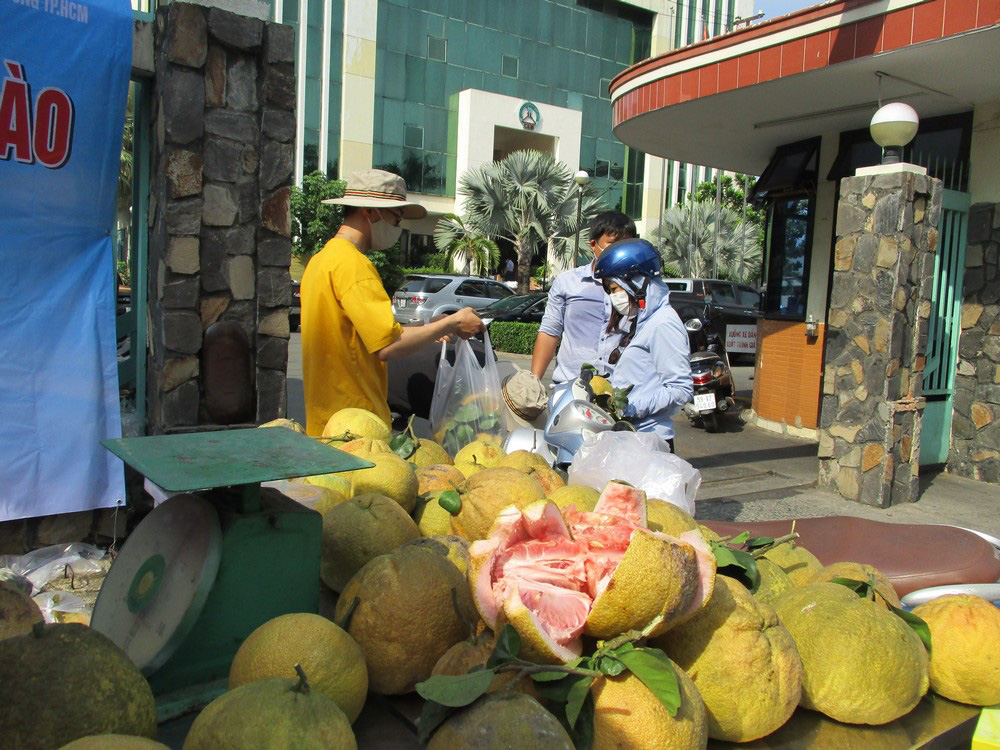Người dân TP HCM giải cứu bưởi đào đặc sản giá 15.000 đồng/kg - Ảnh 1.