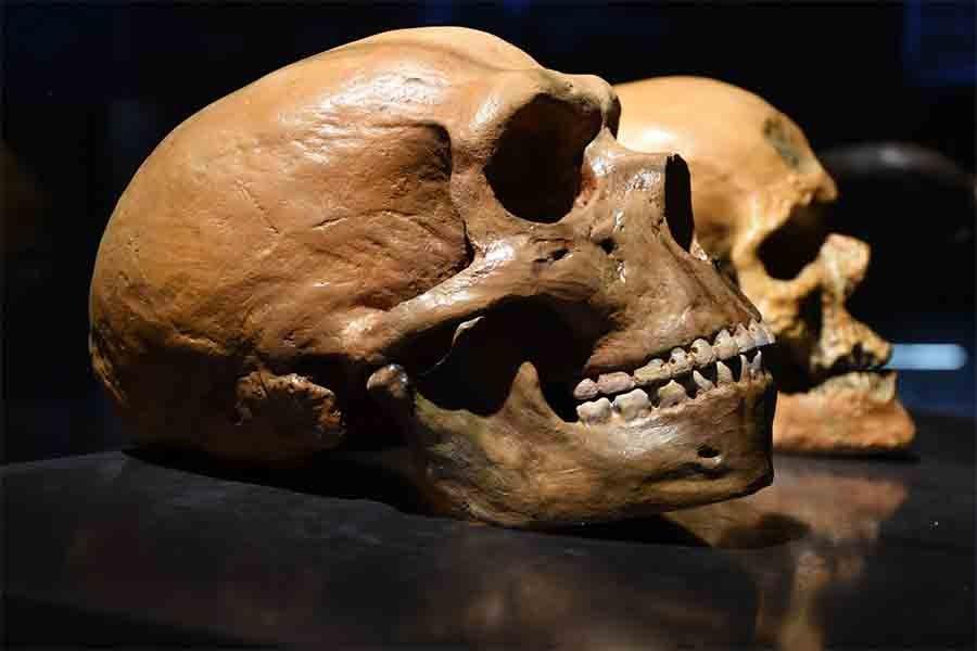 Bí ẩn loài siêu nhân tuyệt chủng có não lớn hơn cả người hiện đại - Ảnh 2.