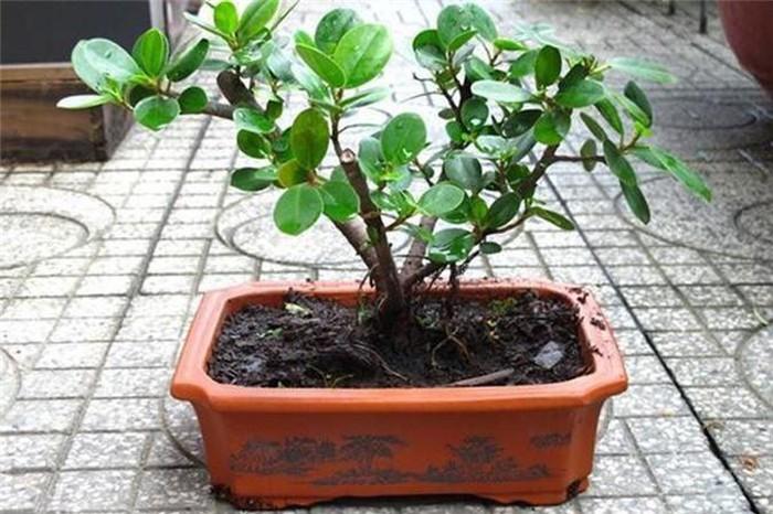 5 loại cây phong thủy đẹp mấy cũng không rước vào nhà