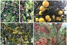 Tròn mắt xem loạt cây 'vỡ kế hoạch' của nông dân Việt