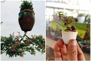 Chiêm ngưỡng 2 vườn bonsai độc đáo xác lập kỷ lục ở Việt Nam