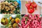 4 loại quả rừng 'giá chát' vẫn được lùng mua