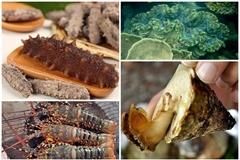 5 hải sản tiến vua nức tiếng thời xưa có giá bao nhiêu?