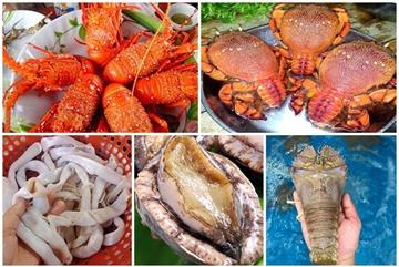 5 loại hải sản 'nhà giàu' ở các vùng biển đảo Việt Nam