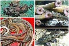 Ngã ngửa 4 loài cá xấu 'phát hờn' thành đặc sản hút khách
