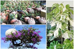 Unique collections of ornamental plants owned by young architect
