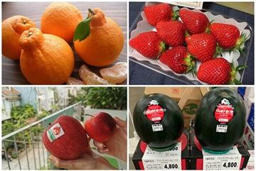 Năm loại trái cây 'siêu quý', có tiền chưa chắc mua được