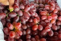 Sự thật 'ngã ngửa' về loại nho ruby không hạt giá rẻ bán đầy chợ Việt