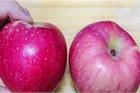 Phân biệt các giống táo ngon và 4 cách để mua trúng quả giòn