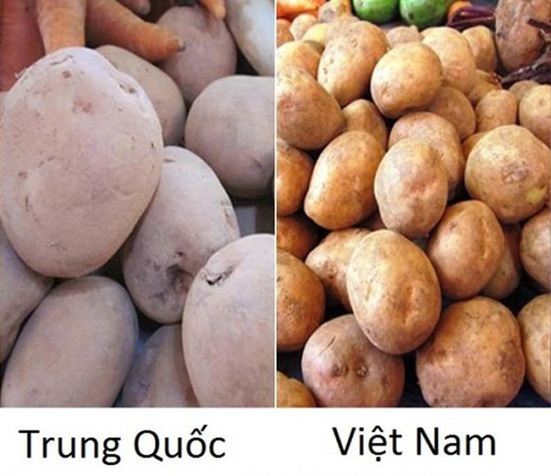 20 cach phan biet rau cu Trung Quoc va Viet Nam, nam chac de tranh mua nham-Hinh-7