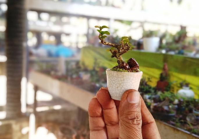 Chiem nguong 2 vuon bonsai doc dao xac lap ky luc o Viet Nam-Hinh-10