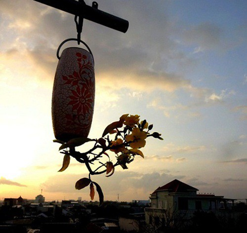 Chiem nguong 2 vuon bonsai doc dao xac lap ky luc o Viet Nam-Hinh-4