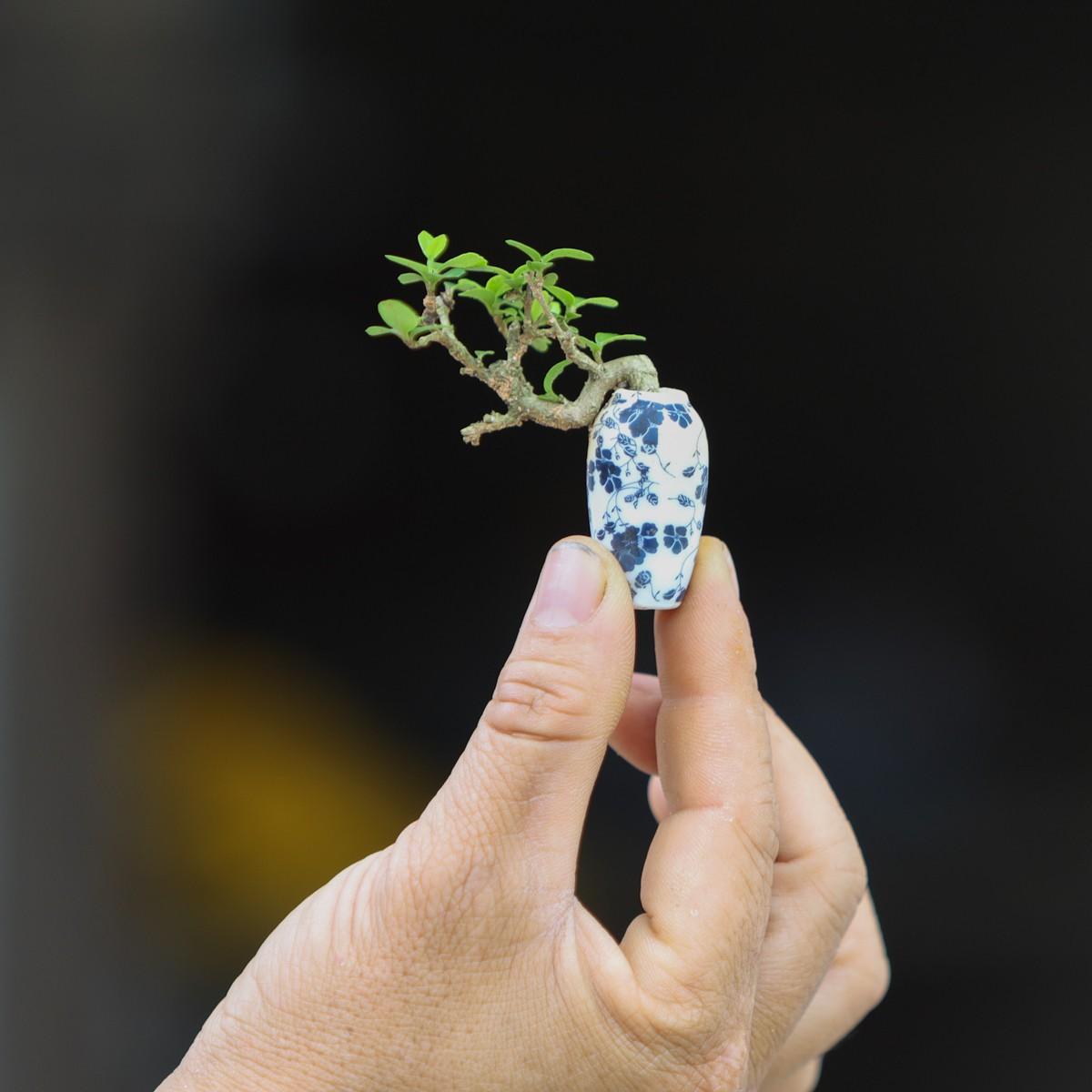 Chiem nguong 2 vuon bonsai doc dao xac lap ky luc o Viet Nam-Hinh-8