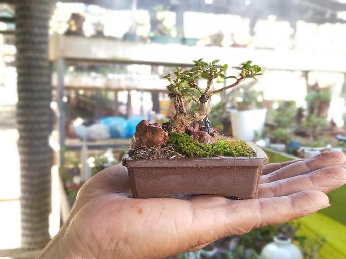 Chiem nguong 2 vuon bonsai doc dao xac lap ky luc o Viet Nam-Hinh-9