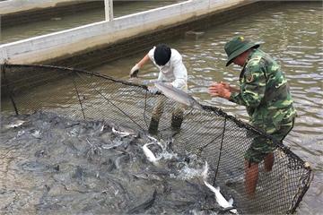 Cá 'lạ' nuôi kích thích tăng trọng từ Trung Quốc tràn vào Việt Nam
