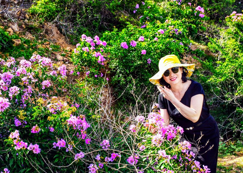 Tháng 5 tím ngát miền bằng lăng Phước Trung, Ninh Thuận - ảnh 5