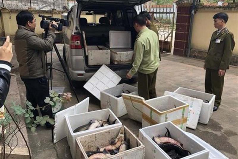 Nhức nhối cá tầm 'lạ' từ Trung Quốc tràn vào Việt Nam - ảnh 2