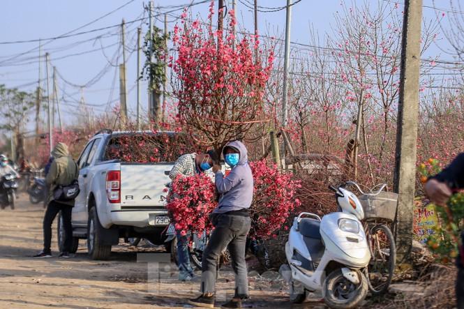 Đào bung nở, làng Nhật Tân nghẽn lối vào ngày cận Tết - ảnh 14