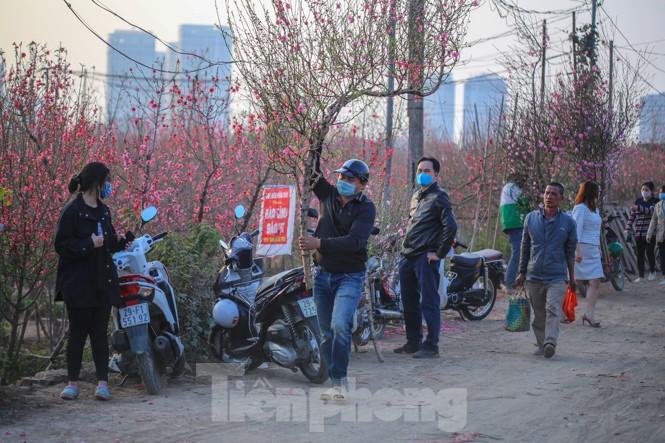 Đào bung nở, làng Nhật Tân nghẽn lối vào ngày cận Tết - ảnh 15