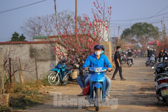 Đào bung nở, làng Nhật Tân nghẽn lối vào ngày cận Tết - ảnh 6