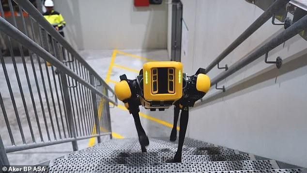 Xem chó robot trị giá 1,7 tỷ đồng của quân đội Pháp 'trổ tài' chiến đấu ảnh 4