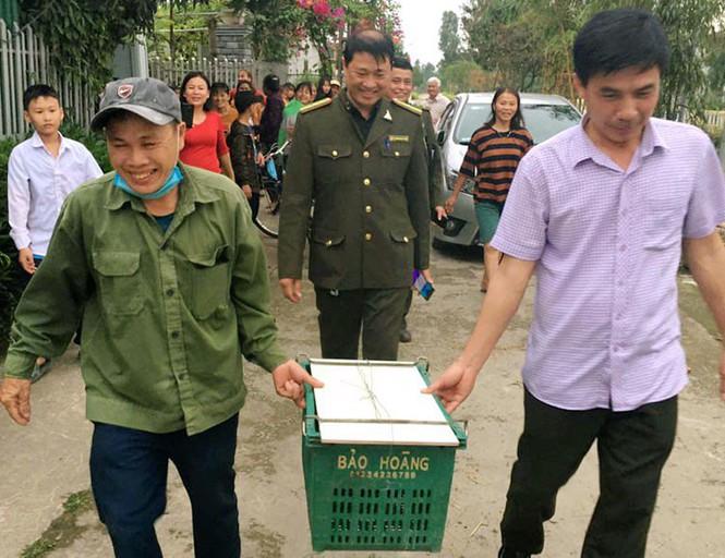 Trăn gấm nặng 7kg bò vào vườn nhà dân ở Hà Tĩnh - ảnh 2