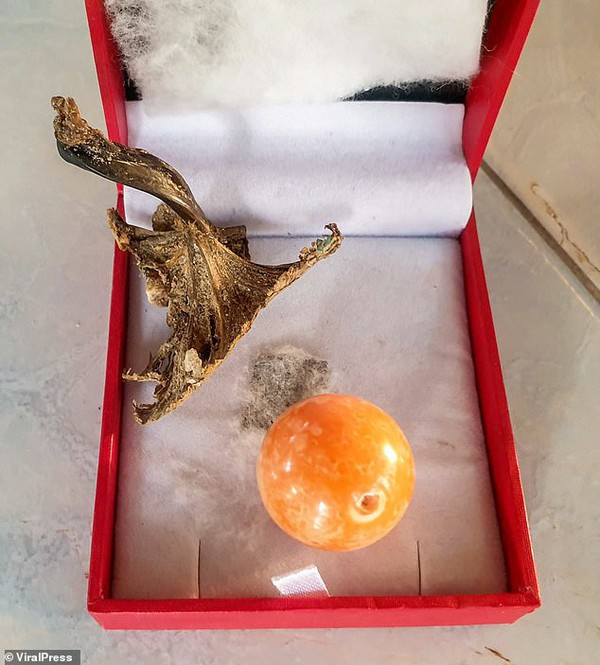 Cắn trúng viên ngọc trai màu cam tiền tỉ khi đang ăn ốc luộc - ảnh 7