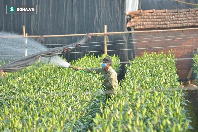 Hoa ly hàng xịn giảm giá sập sàn rẻ như rau, 7.000 đồng/cành sau Tết - Ảnh 4.
