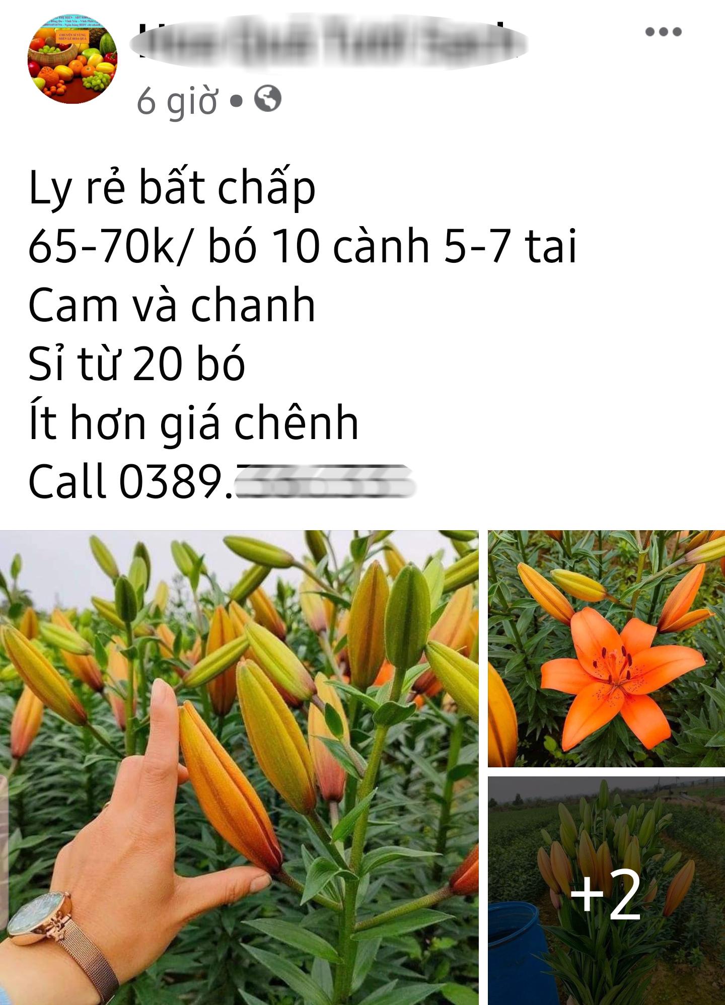 Hoa ly hàng xịn giảm giá sập sàn rẻ như rau, 7.000 đồng/cành sau Tết - Ảnh 2.