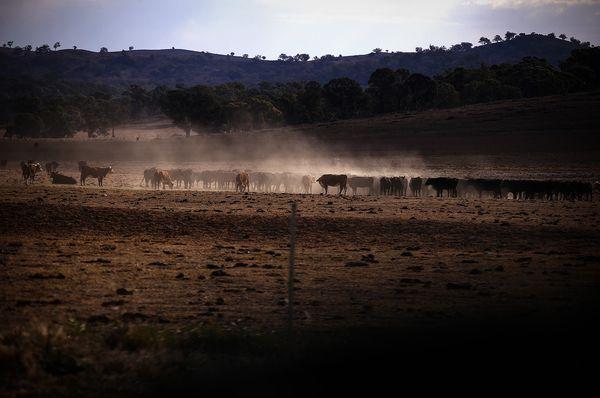 Thịt bò Úc sẽ biến mất khỏi thực đơn trên toàn thế giới vì... Australia không còn bò? - Ảnh 1.