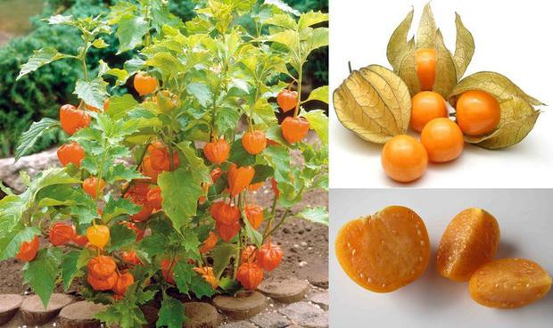 3 loại quả ở Việt Nam mọc dại đầy đường, sang nước ngoài thành của ngon vật lạ bán trong siêu thị gần 1 triệu đồng/kg - Ảnh 6.