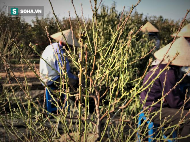 Vặt lá đào thuê, kiếm hơn chục triệu mỗi tháng - Ảnh 6.