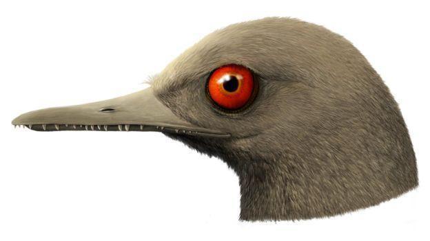 Phát hiện loài khủng long ăn thịt có kích cỡ nhỏ nhất trên Trái Đất, còn bé hơn cả một con chim ruồi - Ảnh 5.