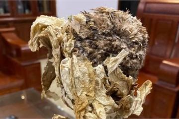 Bông hoa cổ tích 7 năm mới nở được rao bán 100 triệu đồng/kg