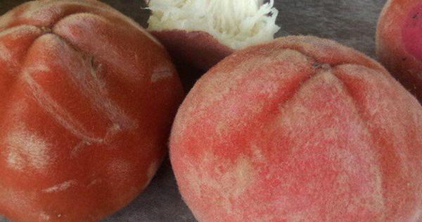 Việt Nam có loại quả lạ như kết hợp giữa đào, hồng và vú sữa: Người miền Tây nhìn phát biết ngay tên gọi!
