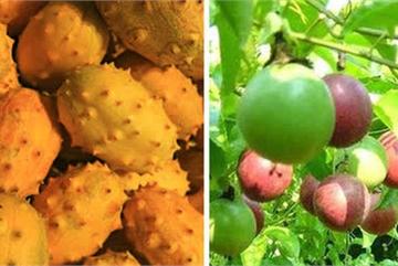 3 loại quả ở Việt Nam mọc dại đầy đường, sang nước ngoài thành của ngon vật lạ bán 1 triệu/kg