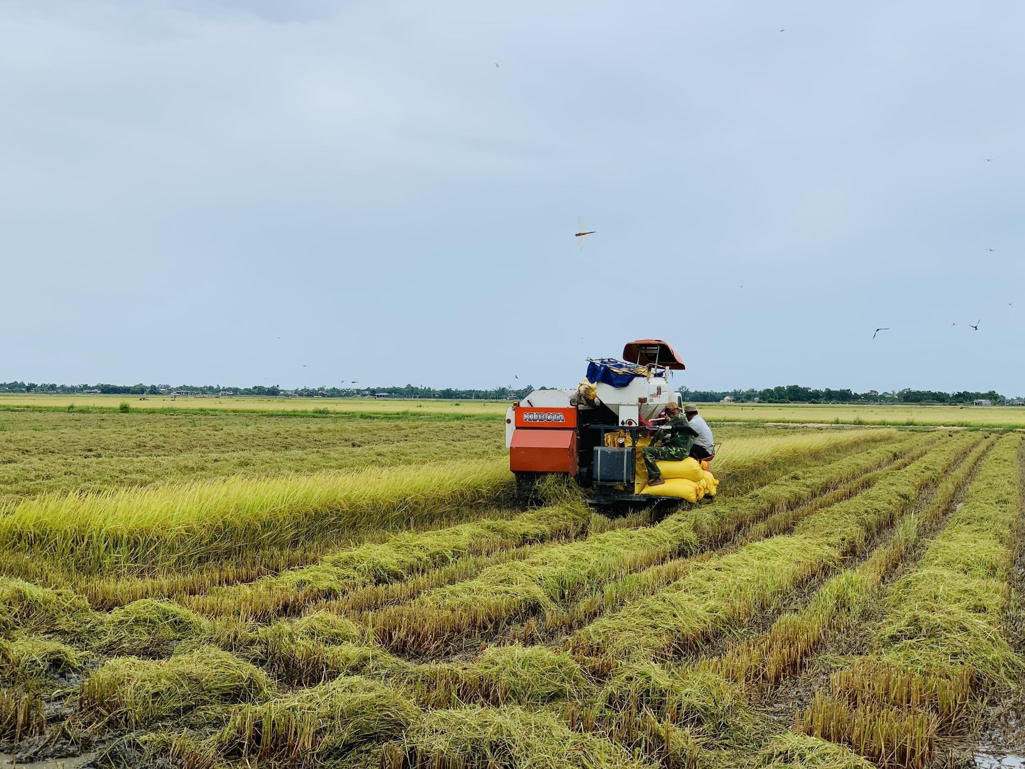 """Biến gạo thành hạt ngọc trời"""" để vươn lên số 1 thế giới-3"""