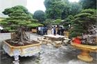 Vườn cây di sản của 'ông vua' cây cảnh Việt Nam, đại gia Trung Quốc trả hơn 500 tỷ không bán