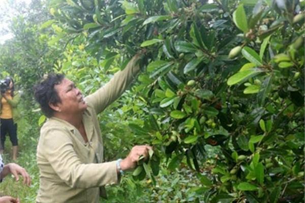 Nhàn nhã trồng thứ trước mọc đầy đồng, nhiều người Việt Nam kiếm 200 triệu/năm