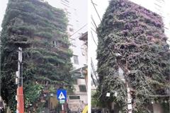 Ngắm ngôi nhà hoa giấy 'vạn người mê' độc nhất ở Hà Nội