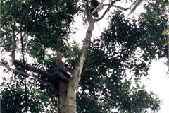 Trồng cây trước mọc hoang cho hạt quý như vàng đen, dân Việt mua ô tô, kiếm tiền tỷ