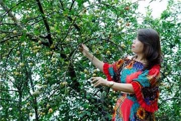 Hội chị em chi tiền triệu, đi hàng trăm km để được hái quả mọc hoang ở rừng