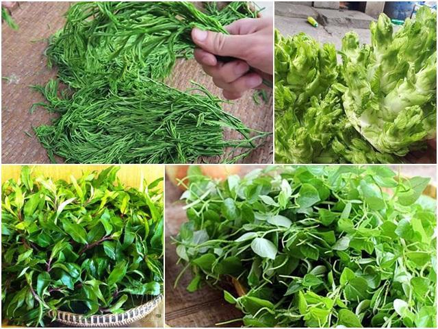 Việt Nam có 10 loại rau rừng mọc dại giá 'đắt cắt cổ', có tiền chưa chắc đã mua được