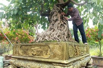 Có trong tay cây bồ đề đỏ bonsai, đại gia nông dân muốn đổi lấy nhà lầu, xe hơi