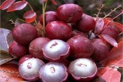 Những loại quả kỳ lạ trồng ở Việt Nam mà chưa chắc người Việt đã biết