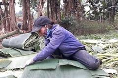 Thứ ở Việt Nam trước bị vứt như rác, nay cắt bán có ngày đút tiền triệu vào túi
